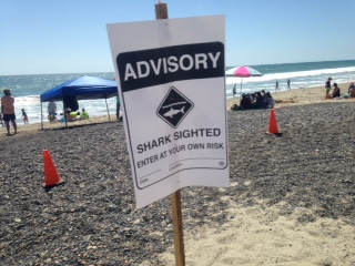 SHARK ADVISORY SIGN