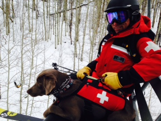 AVALANCHE DOG MS T